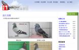 台湾赛鸽联盟